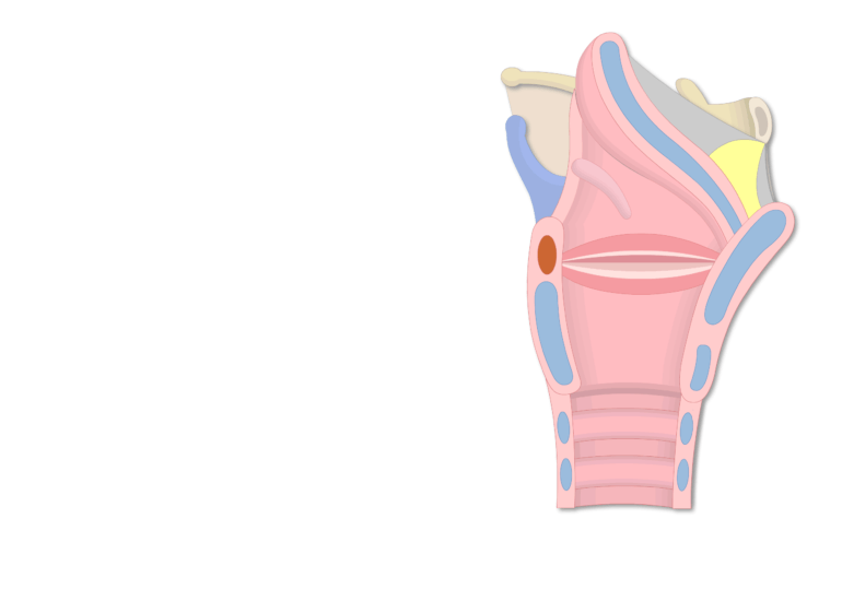 The midsagittal view of cartilage and mucosa of the larynx