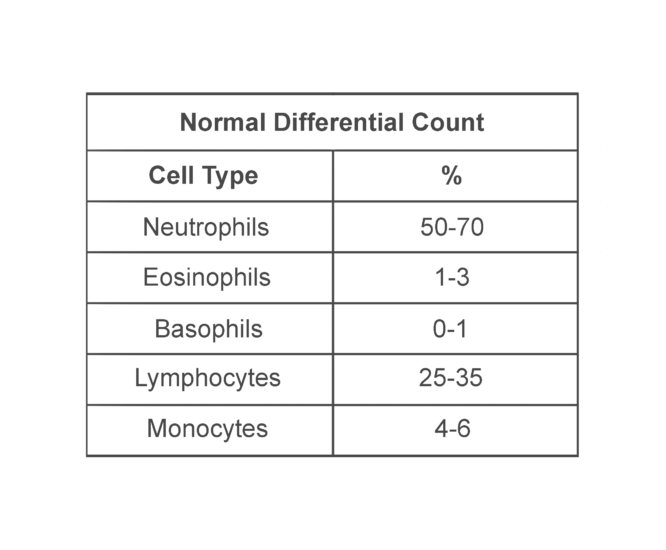 Table showing normal differential count: Neutrophils (50-70%), Eosinphils (1-3%), Basophils (0-1%) Lymphocytes (25-35%), Monocytes (4-6%)