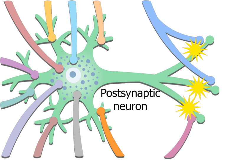 An image showing chemical release from the presynaptic neuron on the axoaxonic synapse, altering the activity of the terminal boutons (synaptic knobs)