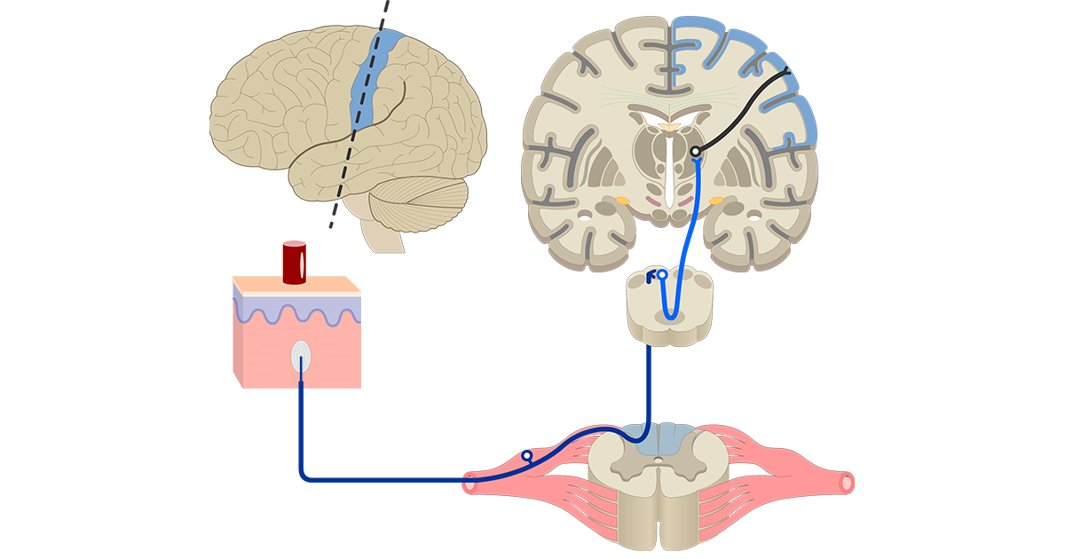 Directions, Reference Planes, & Views of the Brain