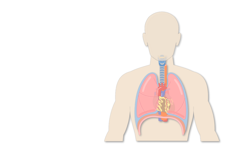Trachea Or Windpipe Location Anatomy And Physiology