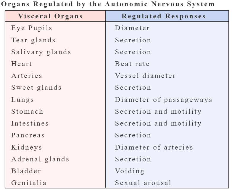 An image showing a table contains the organs which are regulated by the ANS and the response of those organs