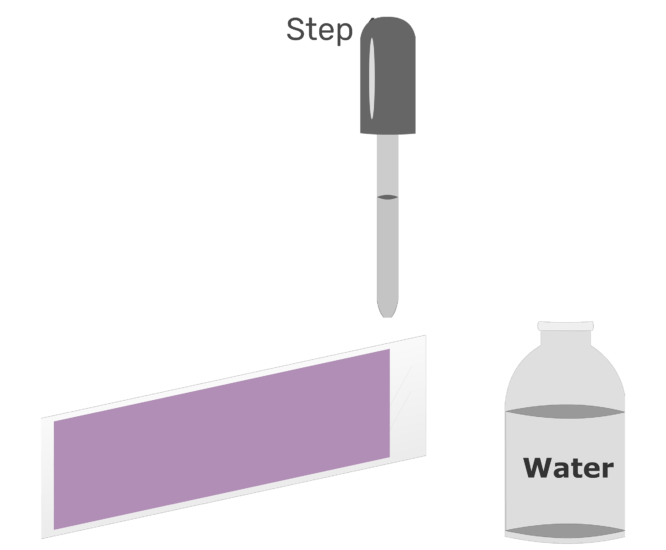 Animation of water being used to rinse the stain off the glass slide.