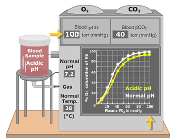 An illustration that demonstrates the low blood plasma ph effect on oxygen-hemoglobin dissociation curve