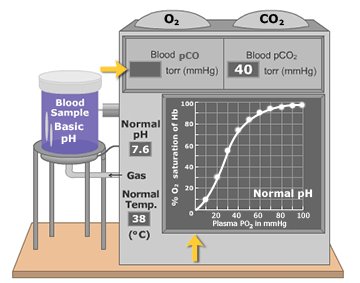 An animation that demonstrates elevated blood plasma