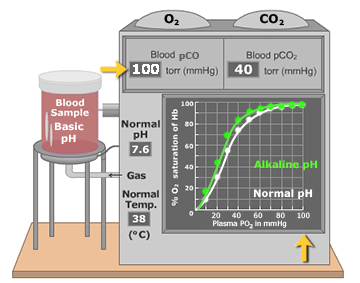 An animation that demonstrates elevated blood plasma effect on oxygen-hemoglobin dissociation curve