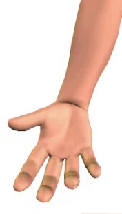 Slide 3 of the animation showing the flexion of the hand at the wrist.