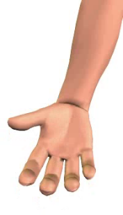 Slide 4 of the animation showing the flexion of the hand at the wrist.
