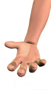 Slide 5 of the animation showing the flexion of the hand at the wrist.