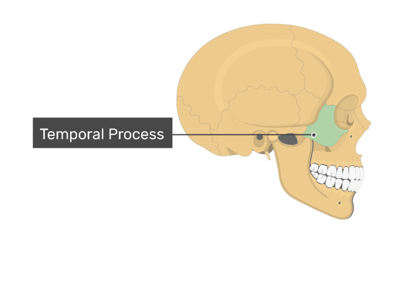 The temporal process highlighted