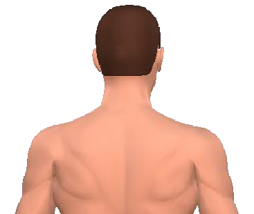 Slide 3 of the animation showing the contraleral rotation of the neck and back.