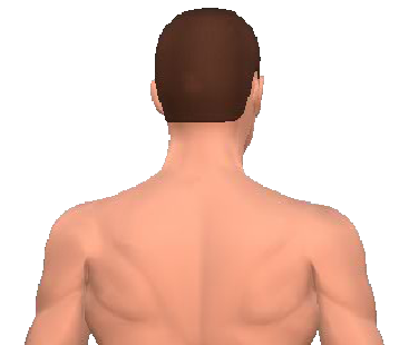 Slide 4 of the animation showing the contraleral rotation of the neck and back.