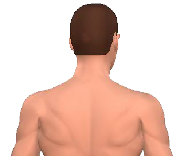 Slide 5 of the animation showing the contraleral rotation of the neck and back.