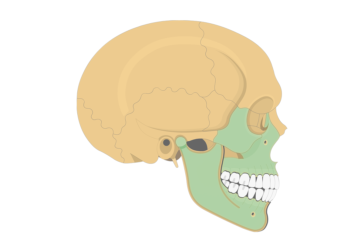 Lateral Skull Bone Markings
