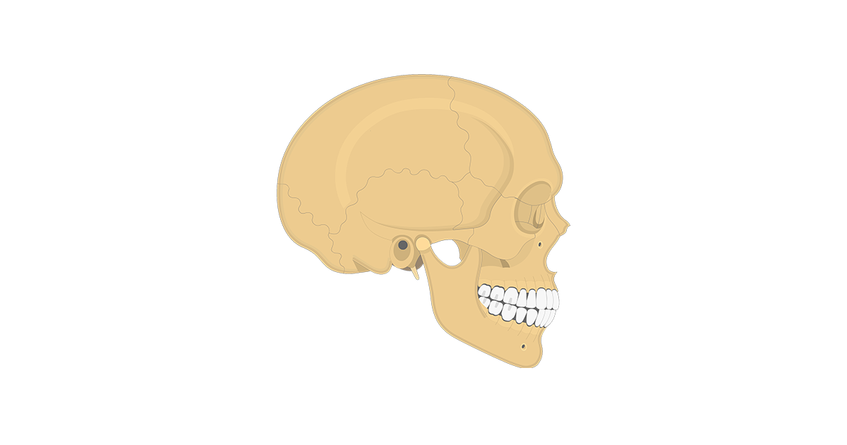 Lateral Skull Bone Markings - Part 2