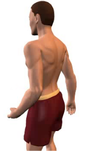Slide 3 of the animation showing forearm extension at the elbow.