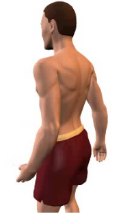 Slide 4 of the animation showing forearm extension at the elbow.