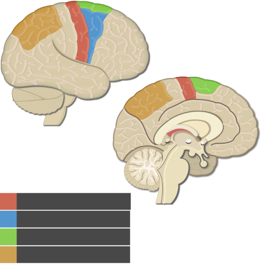 An image showing the Posterior parietal cortex, Supplementary motor area, Primary motor cortex, Premotor cortex, lateral view of the right hemisphere and medial view of the left hemisphere, without labels below