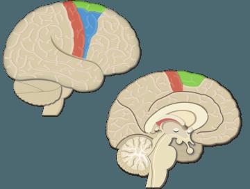 Motor Cortex Areas_2 - Featured
