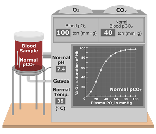 CO2 effect on Oxygen-Hemoglobin Dissociation Curve