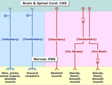 Sensory and Motor Systems - Featured