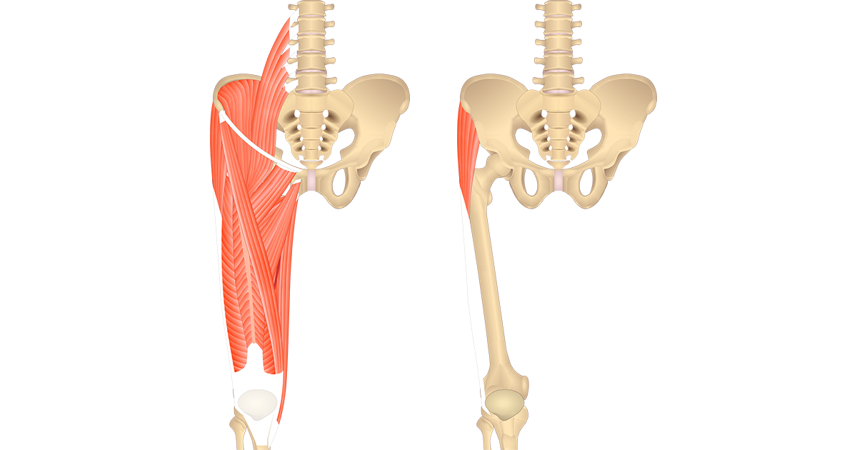 Featured image showing two views on the anterior thigh. The image on the left shows the bony elements and the muscles of the anterior thigh, the image on the right shows the bony elements and the isolated Tensor Fasciae Latae muscle.