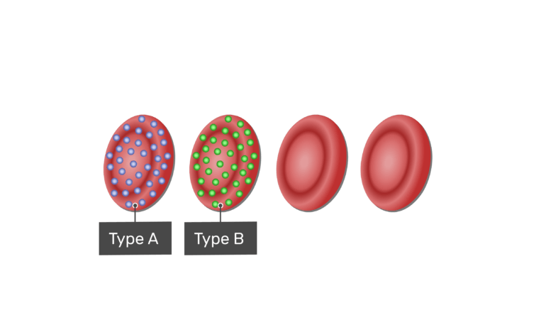 Type B blood type with B antigens