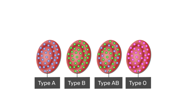 Type O blood type with H antigens
