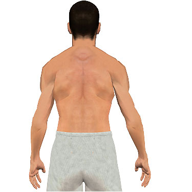 image showing posterior view of figure. Abduction of the arm 2.