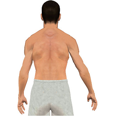 image showing posterior view of figure. Abduction of the arm 3.