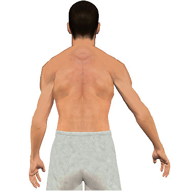 image showing posterior view of figure. Abduction of the arm 4