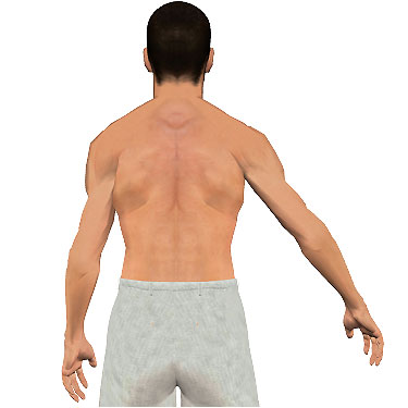image showing posterior view of figure. Abduction of the arm 5.