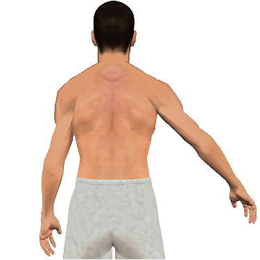 image showing posterior view of figure. Abduction of the arm 6.