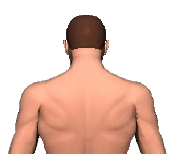 Slide 1 of the animation showing the extension of head and neck.