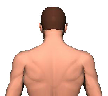 Slide 2 of the animation showing the extension of head and neck.