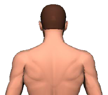 Slide 3 of the animation showing the extension of head and neck.