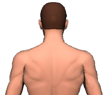 Slide 4 of the animation showing the extension of head and neck.