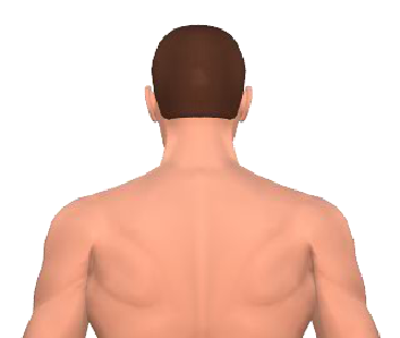 Slide 1 of the animation showing the extension of the cervical (neck) and thoracic (back) vertebrae.