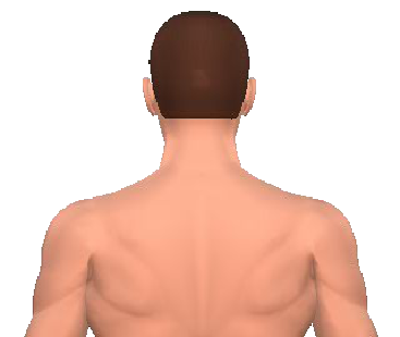 Slide 3 of the animation showing the extension of the cervical (neck) and thoracic (back) vertebrae.