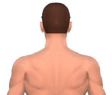 Slide 4 of the animation showing the extension of the cervical (neck) and thoracic (back) vertebrae.