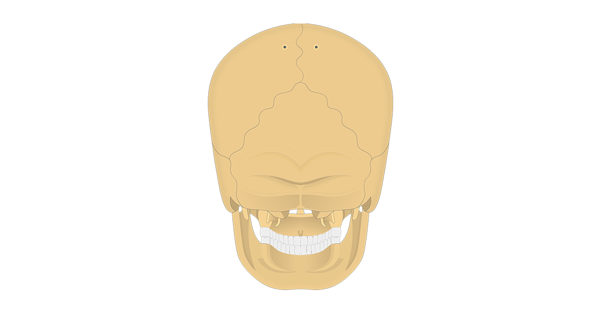 featured image of the posterior view of the skull bone markings