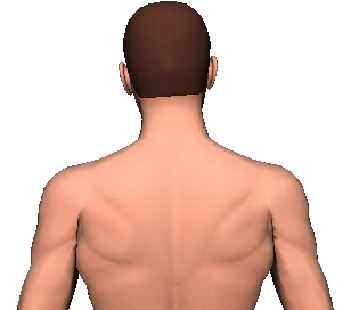 Slide 2 of the animation showing lateral flexion of head and neck to the same side.