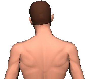 Slide 3 of the animation showing lateral flexion of head and neck to the same side.