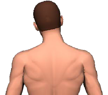 Slide 4 of the animation showing lateral flexion of head and neck to the same side.