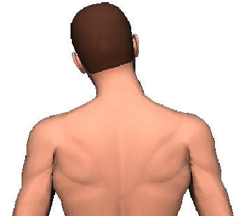 Slide 5 of the animation showing lateral flexion of head and neck to the same side.