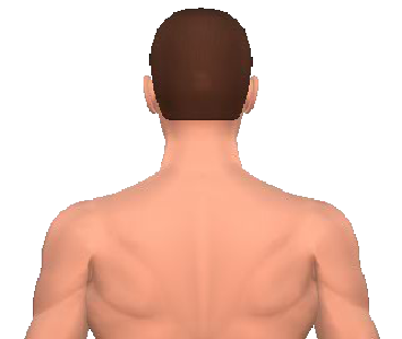 Slide 1 of the animation showing the lateral flexion of neck and back.
