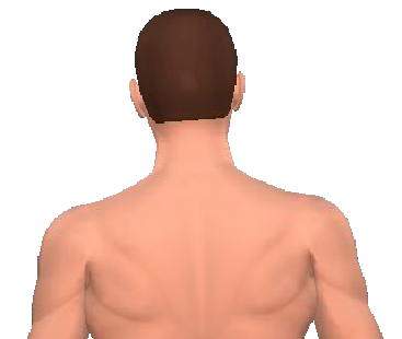 Slide 2 of the animation showing the lateral flexion of neck and back.