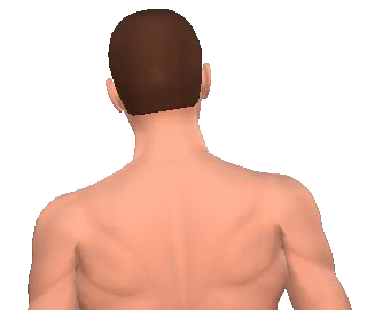 Slide 3 of the animation showing the lateral flexion of neck and back.