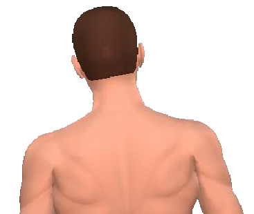 Slide 4 of the animation showing the lateral flexion of neck and back.