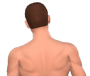 Slide 5 of the animation showing the lateral flexion of neck and back.